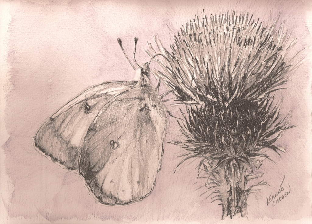 butterfly-thistle-bliss